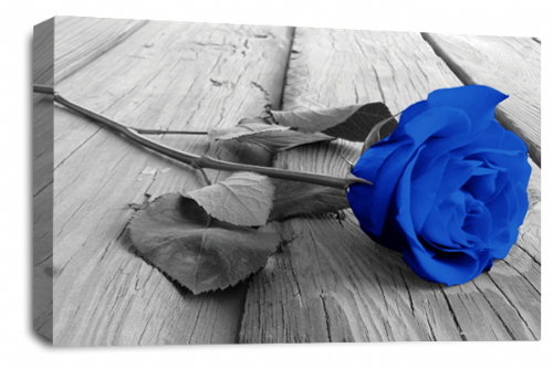 Rose Flower Canvas Wall Art Blue Grey White Floral Picture Print